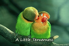 A little tenderness